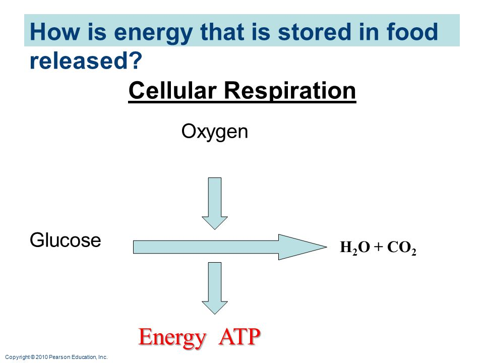 How is energy that is stored in food released