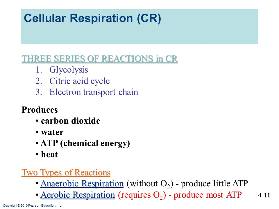 Cellular Respiration (CR)