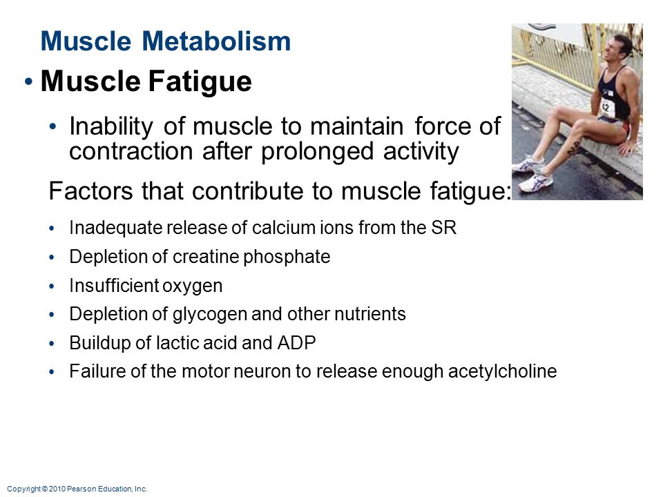 Muscle Fatigue Muscle Metabolism