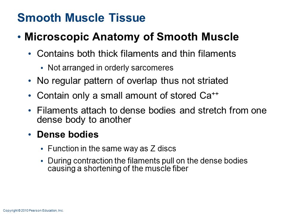 Smooth Muscle Tissue Microscopic Anatomy of Smooth Muscle