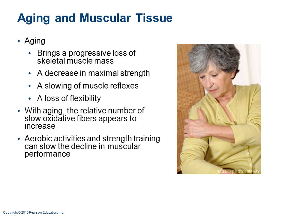 Aging and Muscular Tissue