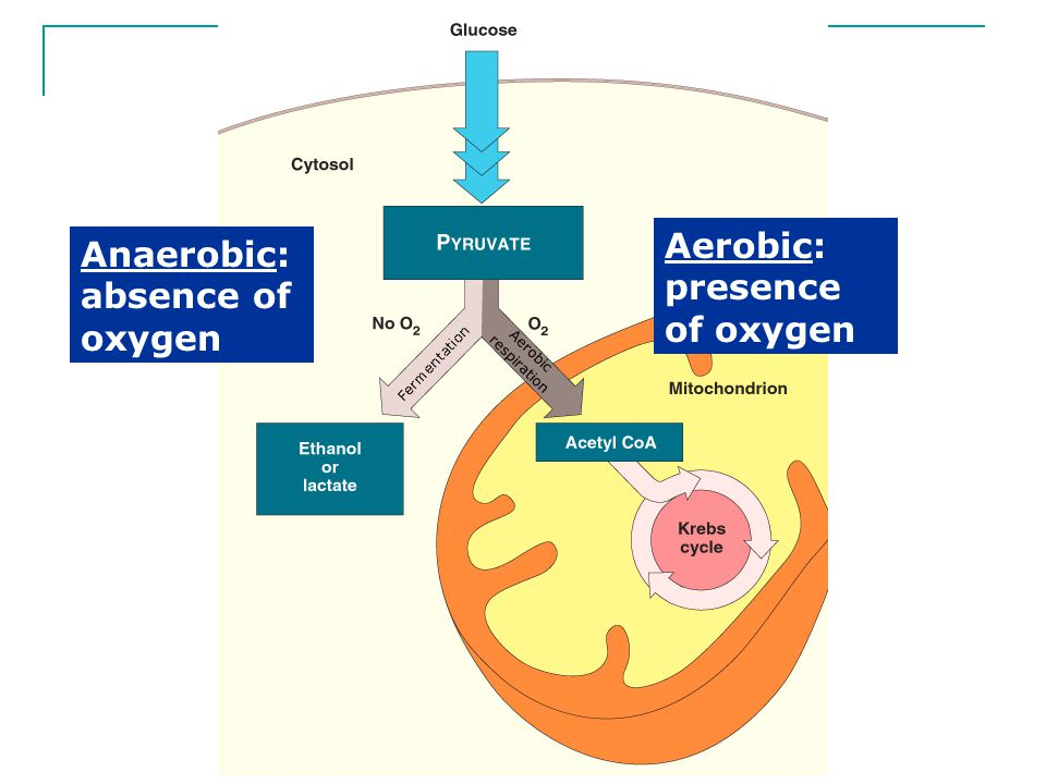 Aerobic: presence of oxygen Anaerobic: absence of oxygen