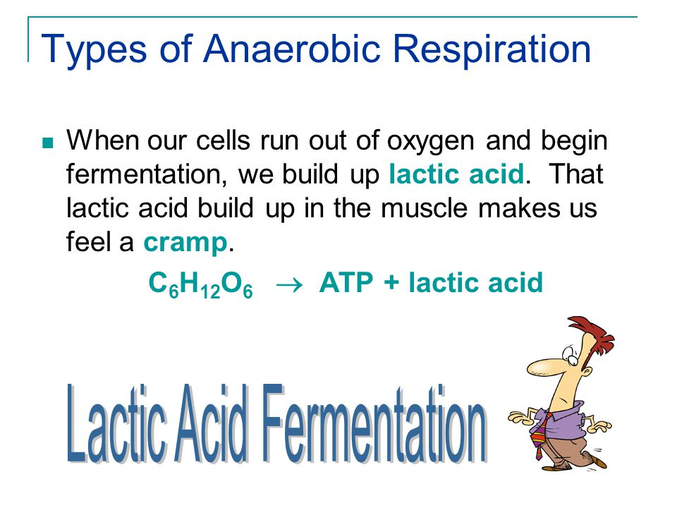 Types of Anaerobic Respiration