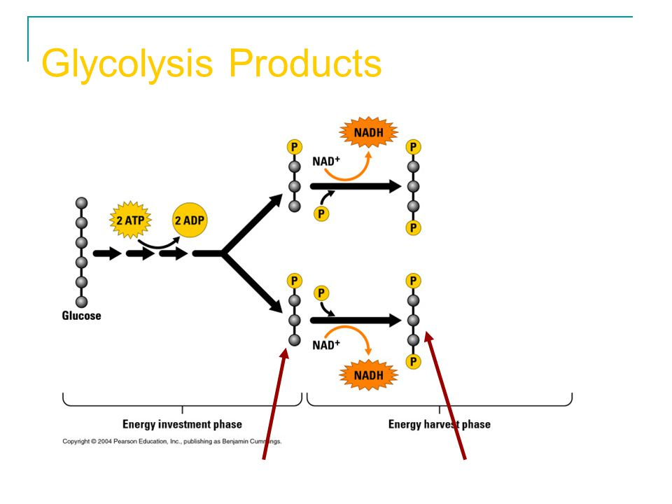 Glycolysis Products 2 Pyruvate produced Pyruvic acid