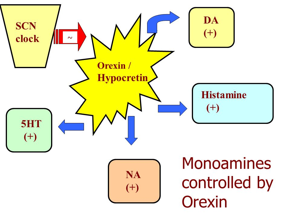 Monoamines controlled by Orexin