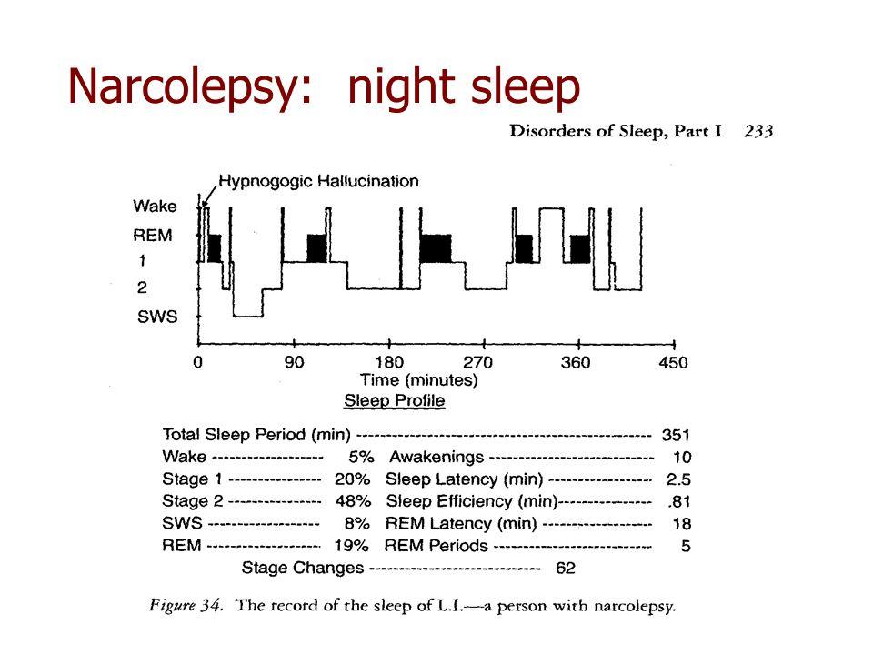 Narcolepsy: night sleep