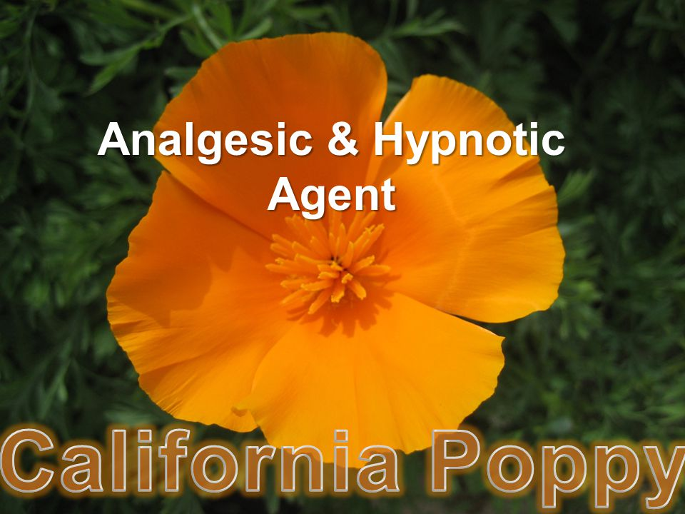 Analgesic & Hypnotic Agent