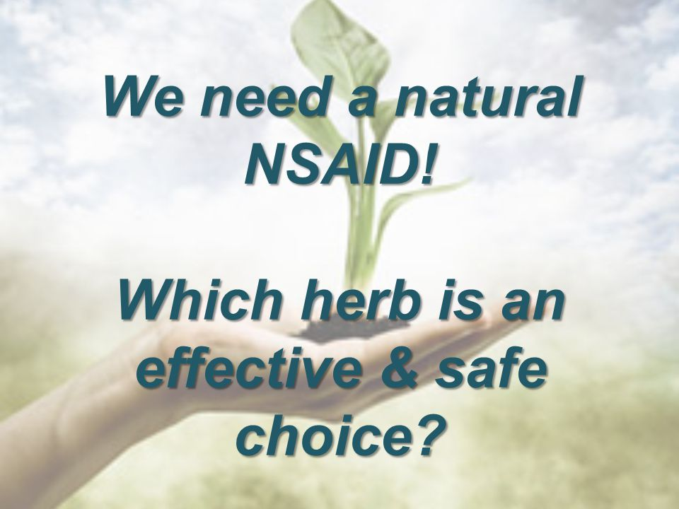We need a natural NSAID! Which herb is an effective & safe choice