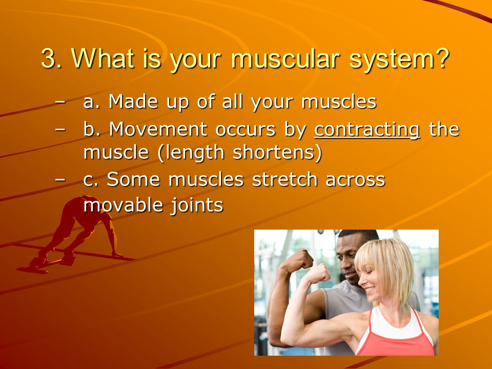 3. What is your muscular system