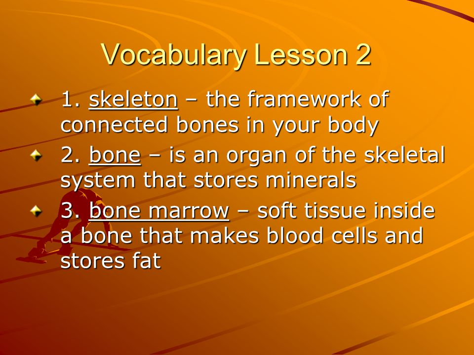 Vocabulary Lesson 2 1. skeleton – the framework of connected bones in your body. 2. bone – is an organ of the skeletal system that stores minerals.