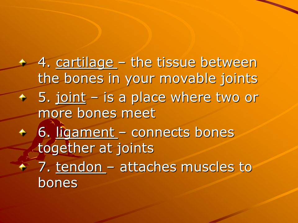 4. cartilage – the tissue between the bones in your movable joints