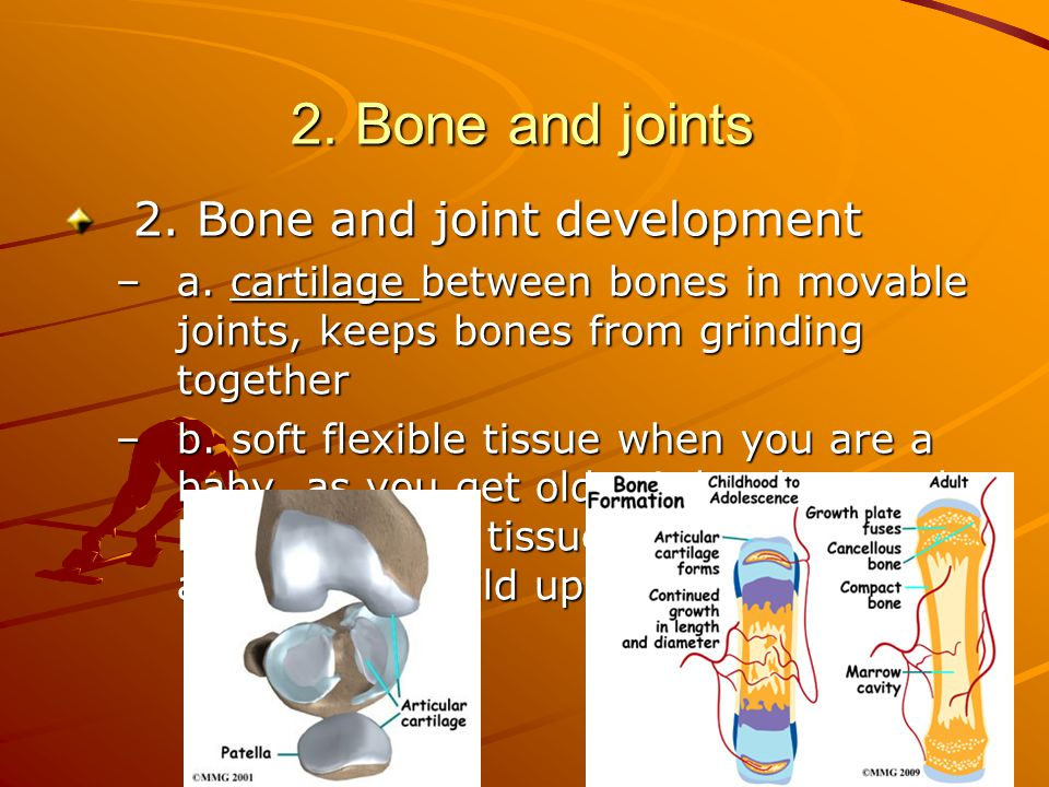 2. Bone and joints 2. Bone and joint development