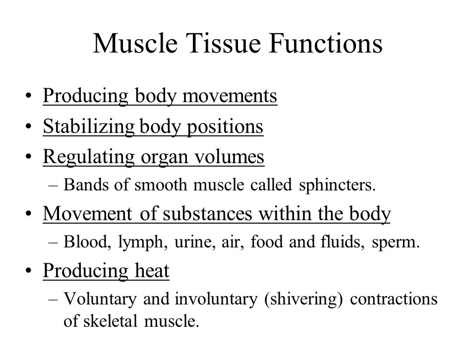 Muscle Tissue Functions