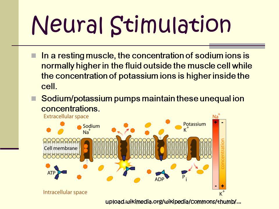 Neural Stimulation