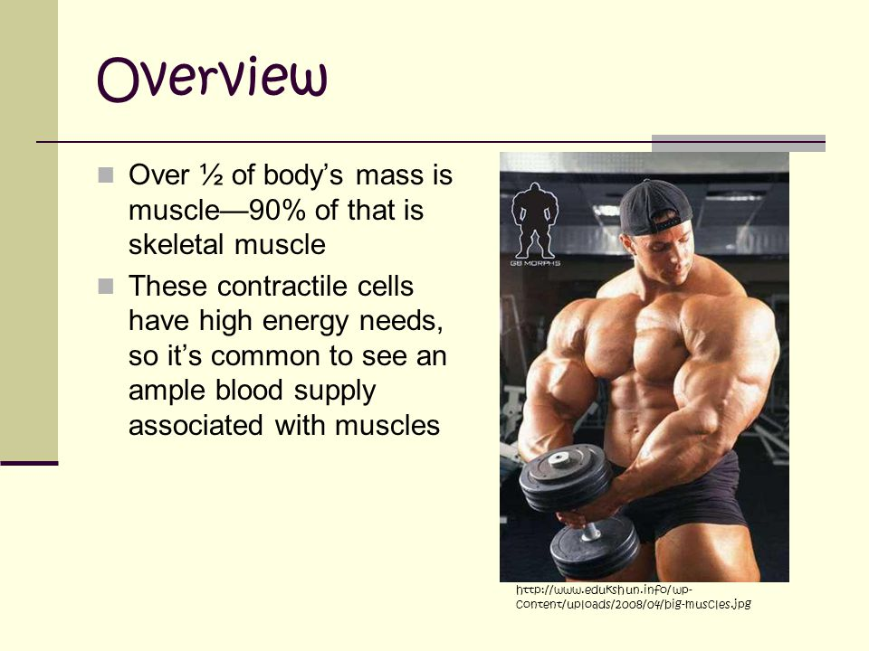 Overview Over ½ of body's mass is muscle—90% of that is skeletal muscle.