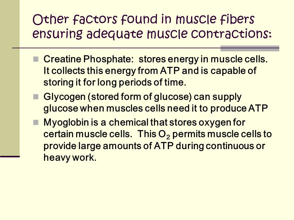 Other factors found in muscle fibers ensuring adequate muscle contractions: