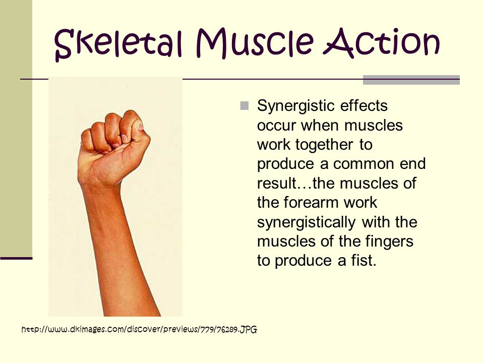 Skeletal Muscle Action