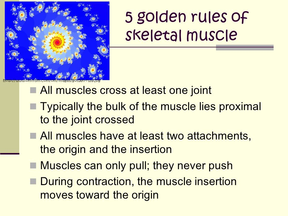 5 golden rules of skeletal muscle