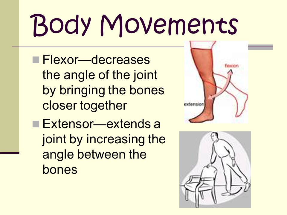 Body Movements Flexor—decreases the angle of the joint by bringing the bones closer together.