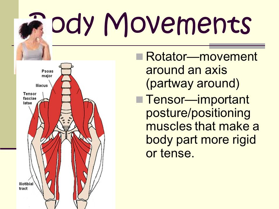 Body Movements Rotator—movement around an axis (partway around)