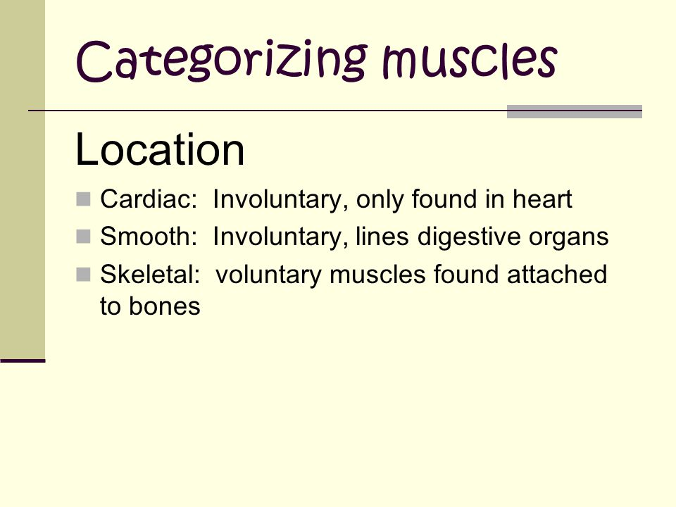 Categorizing muscles Location