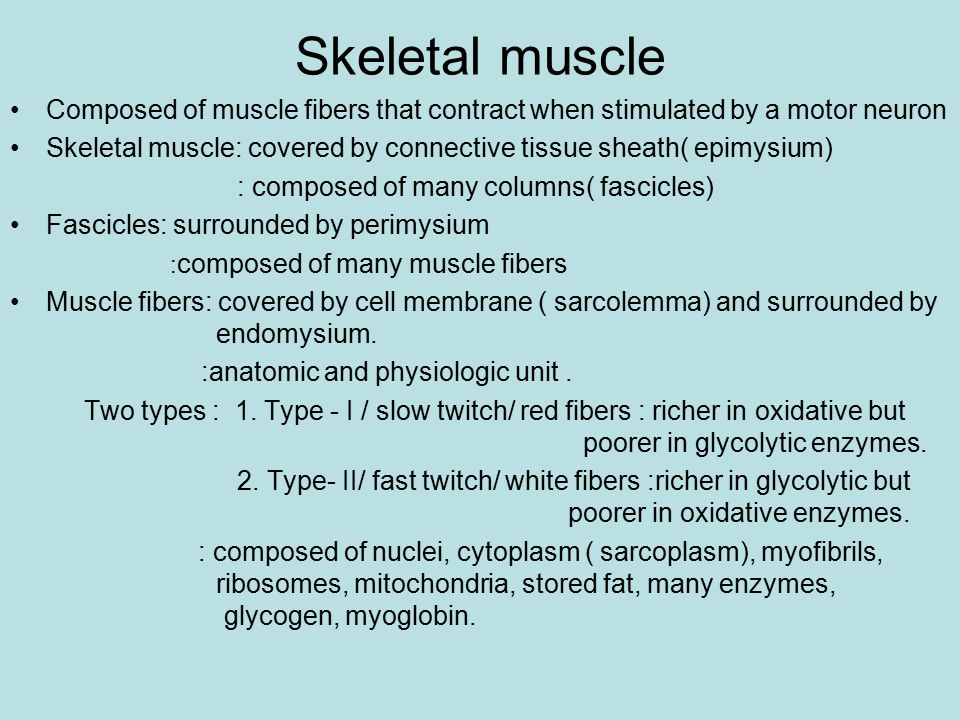 Skeletal muscle Composed of muscle fibers that contract when stimulated by a motor neuron.
