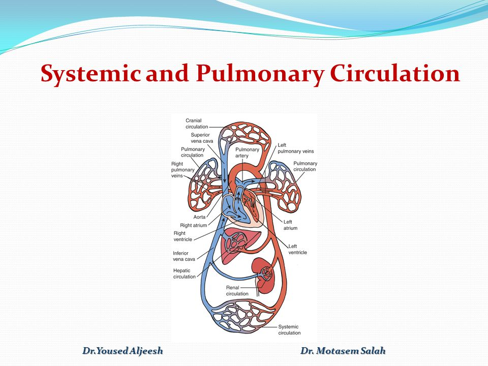 Systemic and Pulmonary Circulation