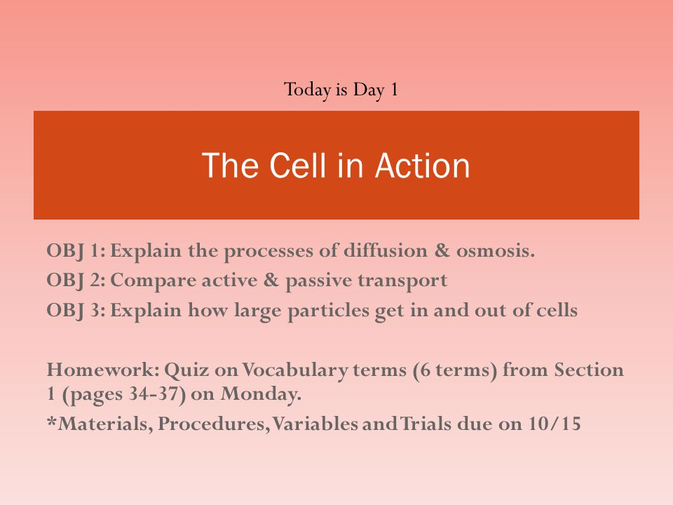 The Cell in Action Today is Day 1