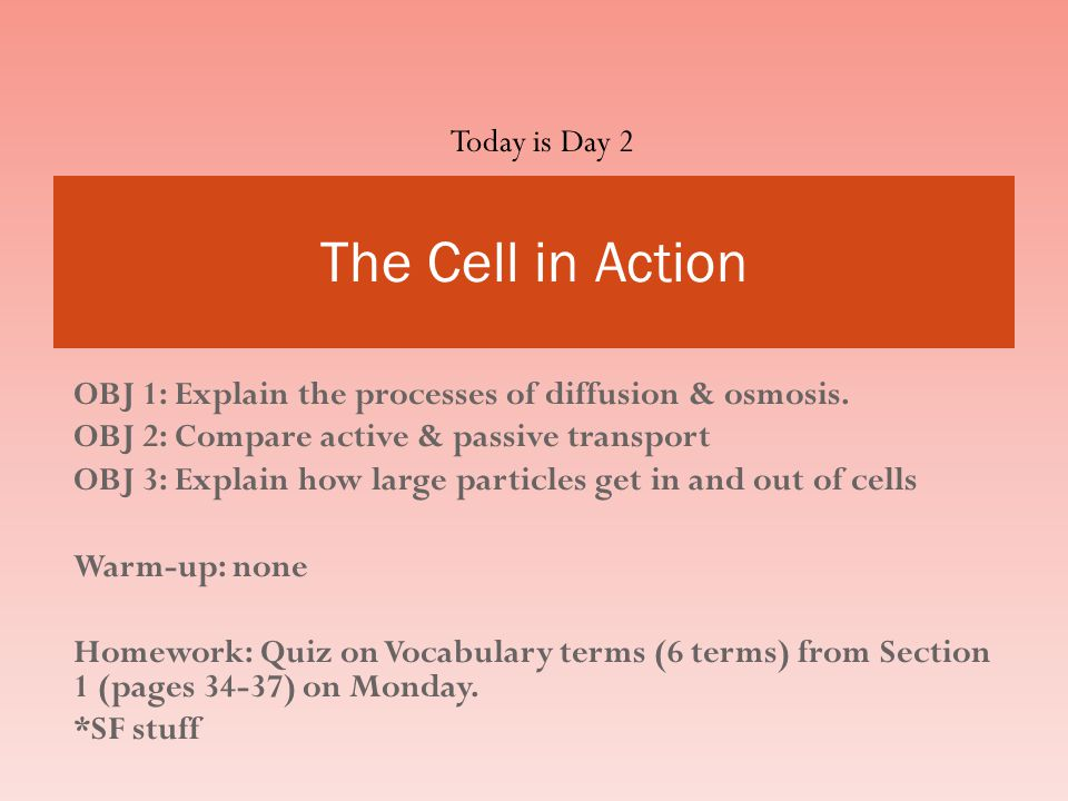 The Cell in Action Today is Day 2