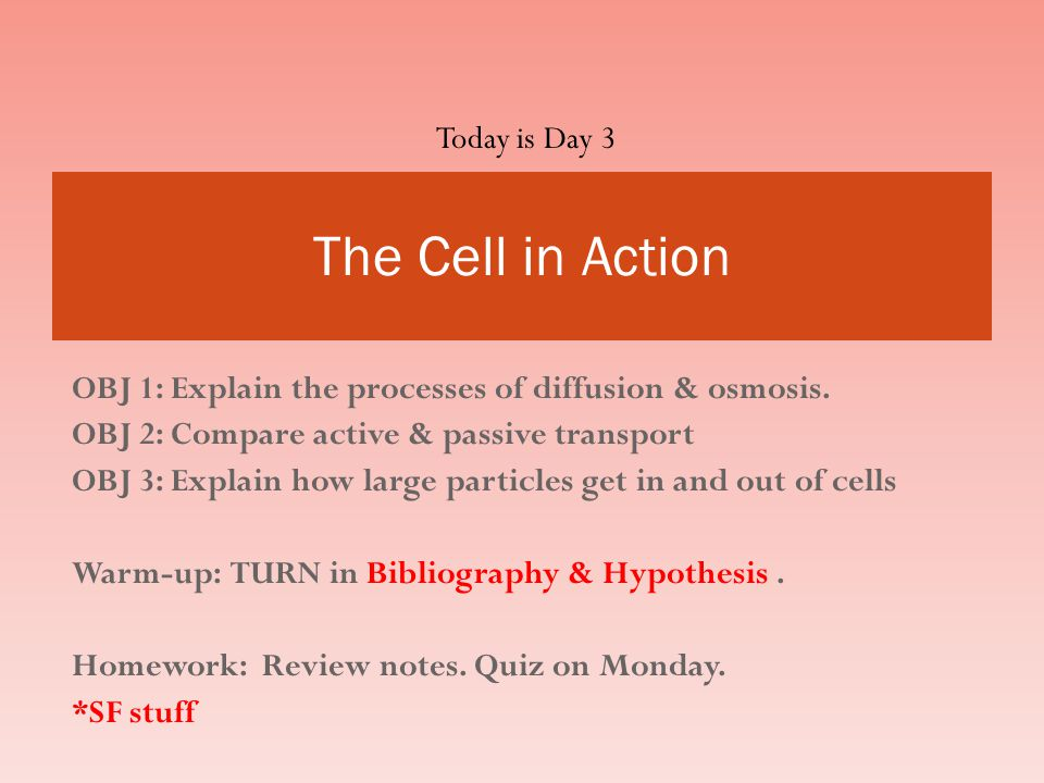 The Cell in Action Today is Day 3