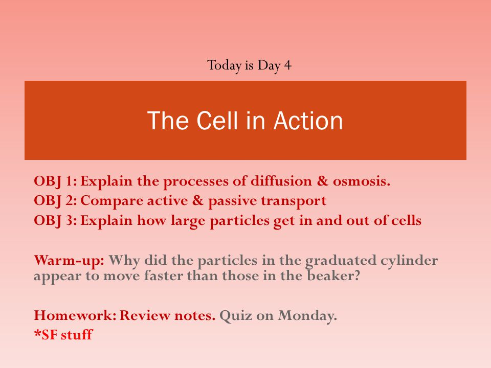 The Cell in Action Today is Day 4