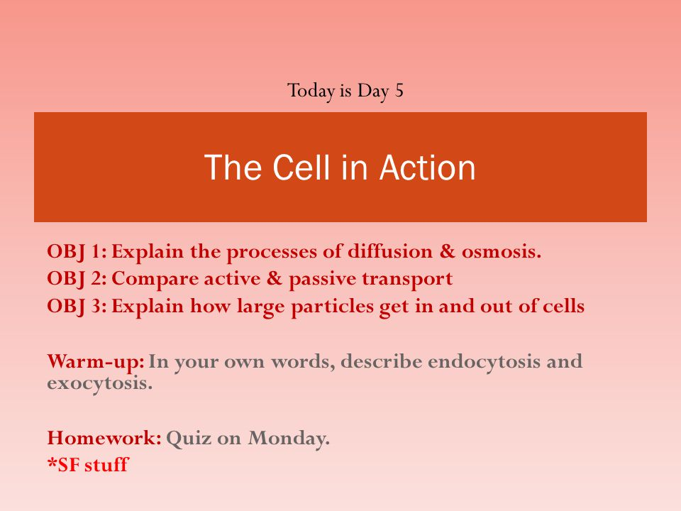 The Cell in Action Today is Day 5