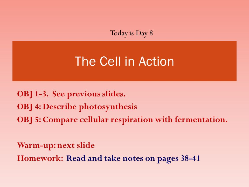 The Cell in Action OBJ 1-3. See previous slides.