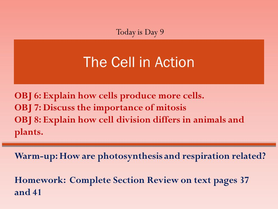 The Cell in Action The Cell in Action