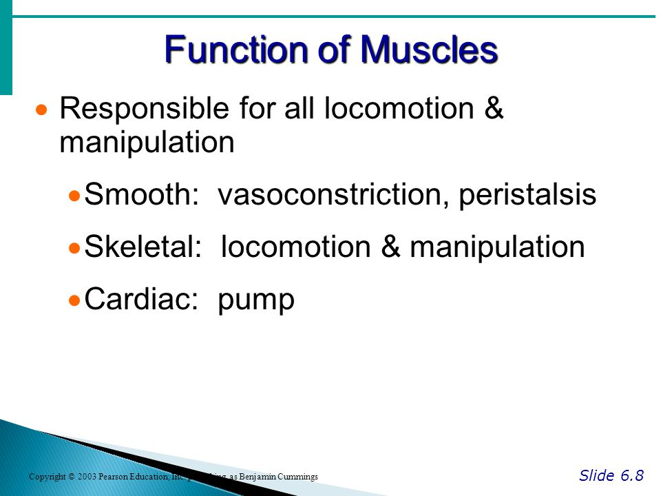 Function of Muscles Responsible for all locomotion & manipulation