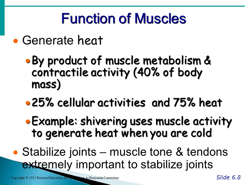 Function of Muscles Generate heat