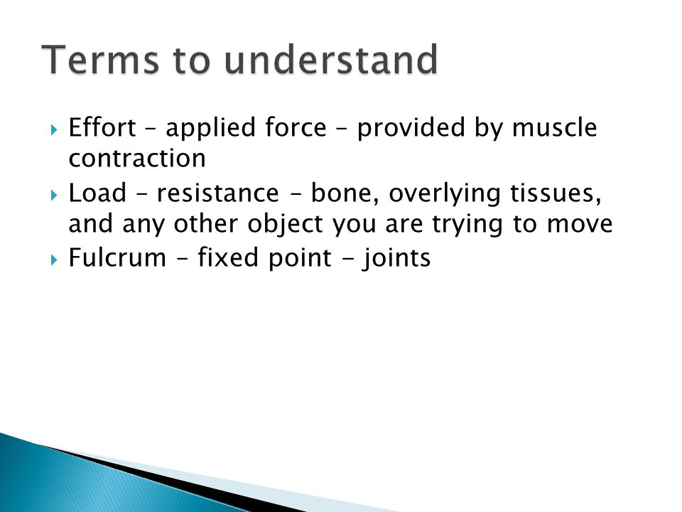 Terms to understand Effort – applied force – provided by muscle contraction.