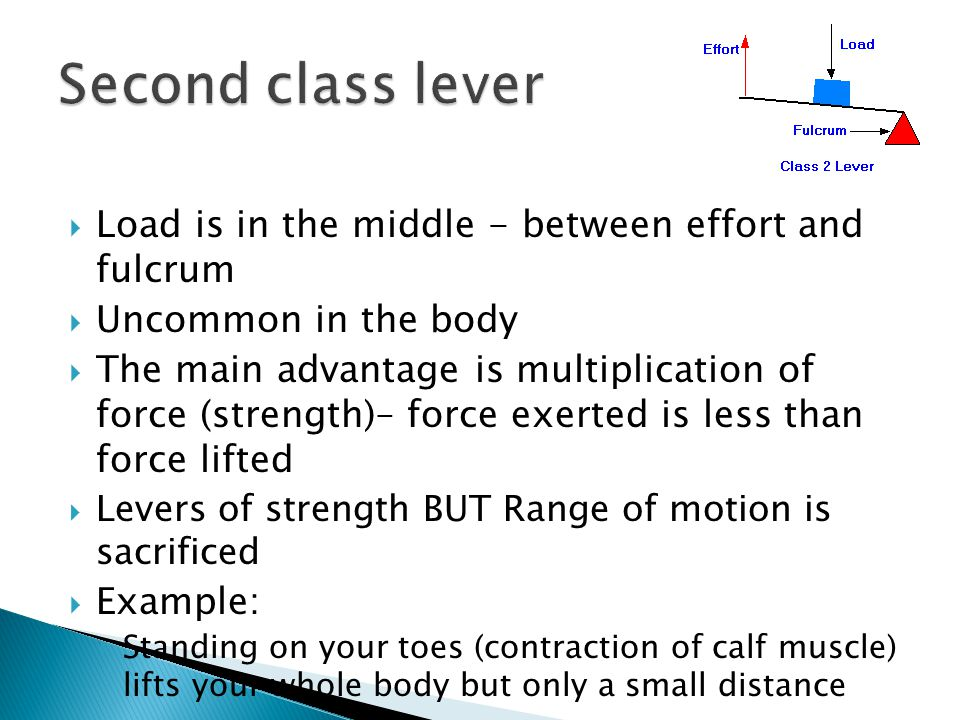 Second class lever Load is in the middle - between effort and fulcrum