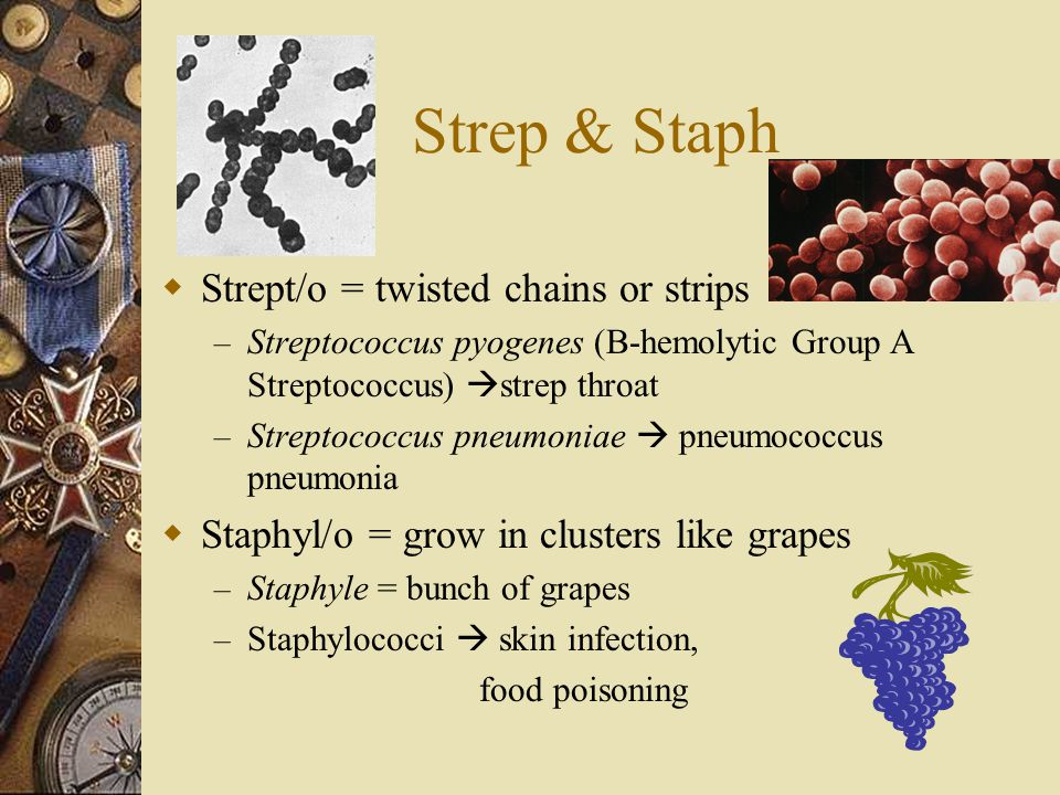 Strep & Staph Strept/o = twisted chains or strips