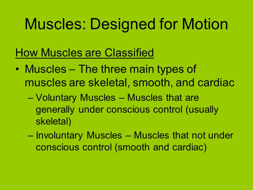 Muscles: Designed for Motion