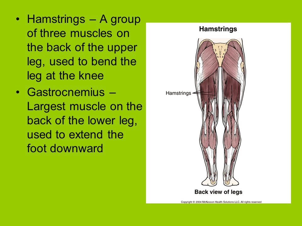 Hamstrings – A group of three muscles on the back of the upper leg, used to bend the leg at the knee