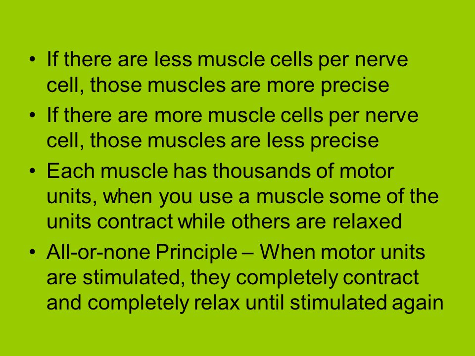If there are less muscle cells per nerve cell, those muscles are more precise