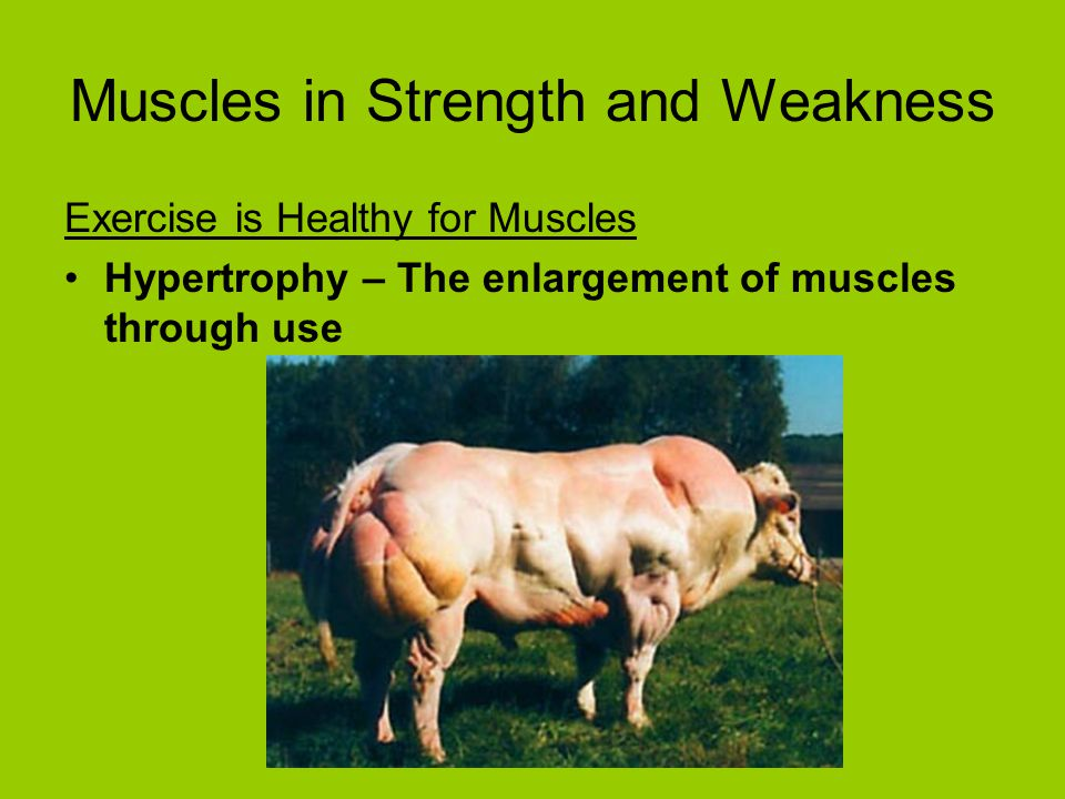 Muscles in Strength and Weakness