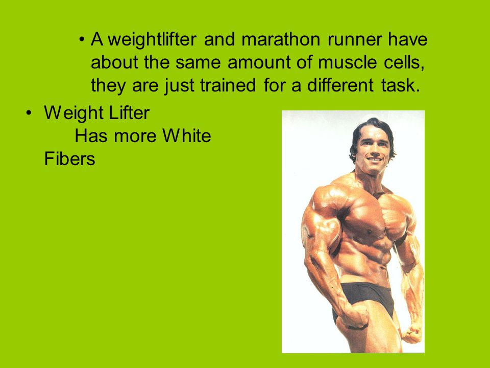 A weightlifter and marathon runner have about the same amount of muscle cells, they are just trained for a different task.