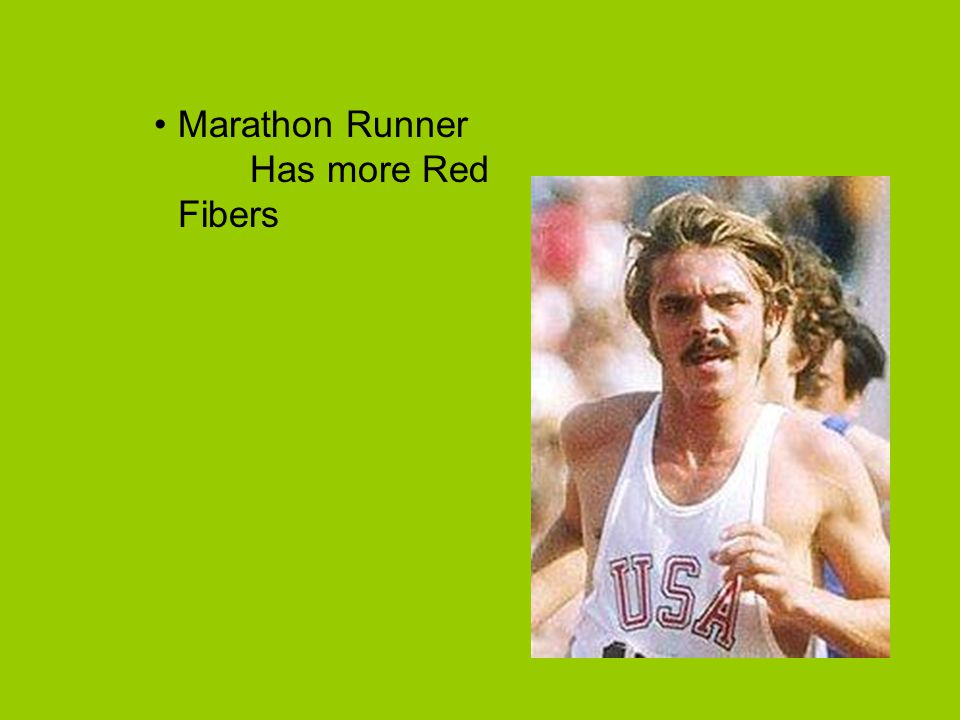 Marathon Runner Has more Red Fibers
