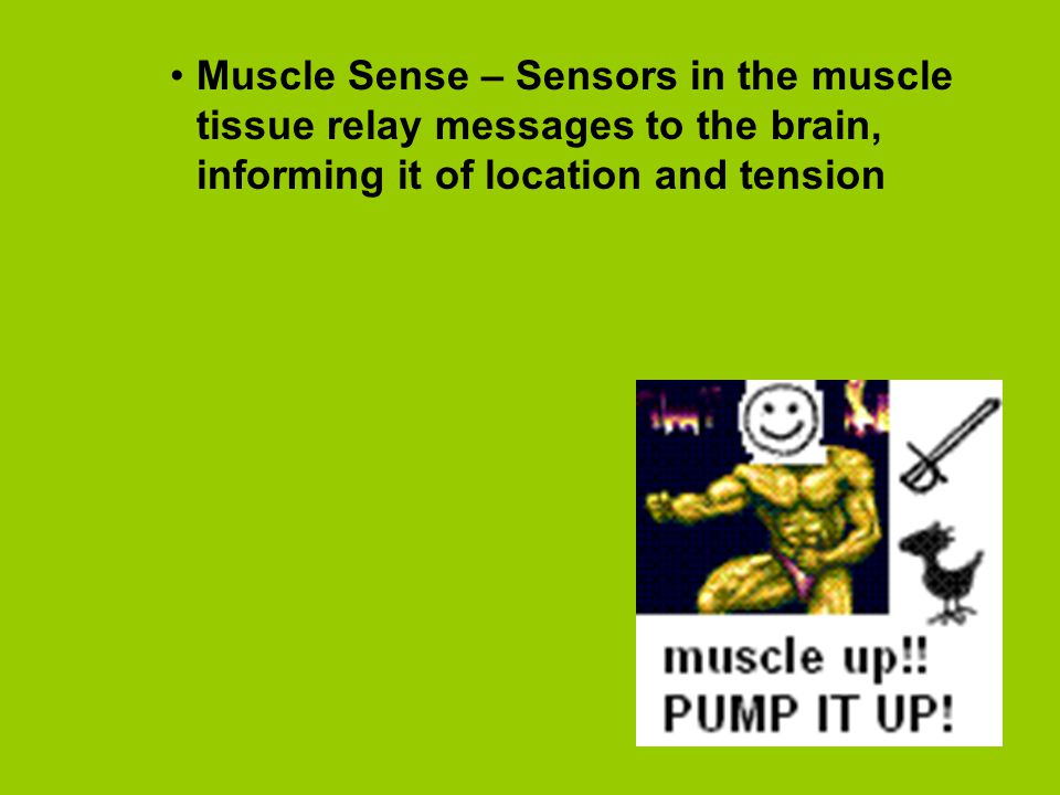 Muscle Sense – Sensors in the muscle tissue relay messages to the brain, informing it of location and tension