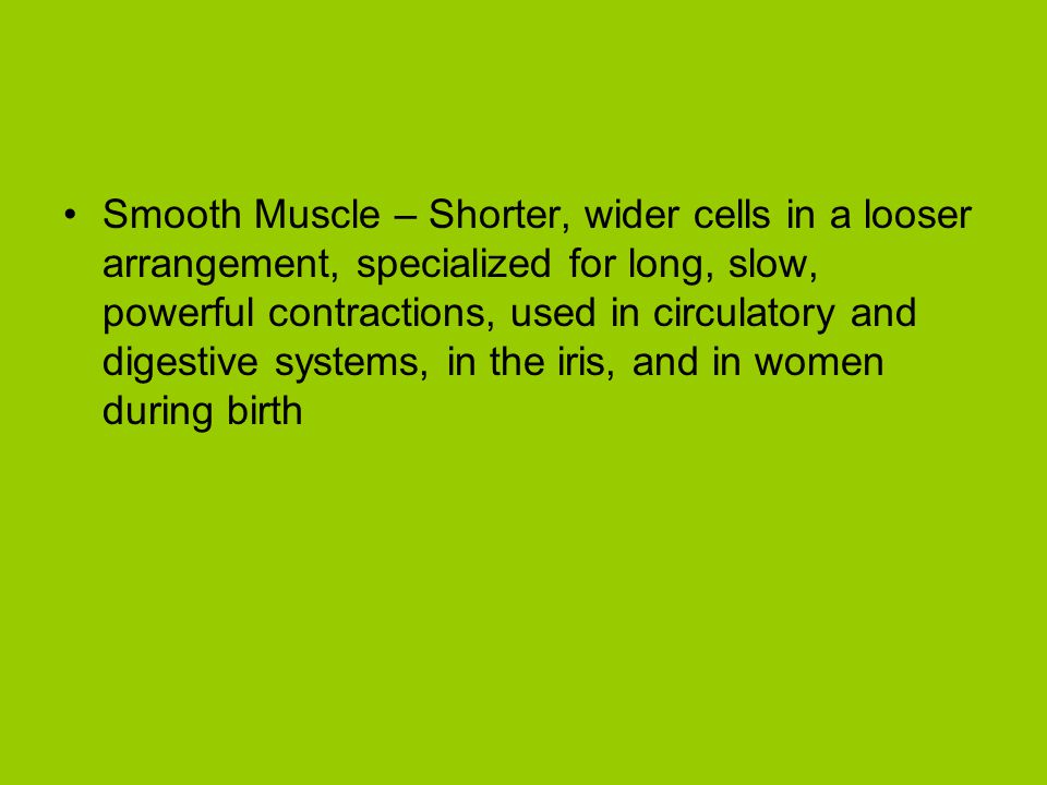 Smooth Muscle – Shorter, wider cells in a looser arrangement, specialized for long, slow, powerful contractions, used in circulatory and digestive systems, in the iris, and in women during birth