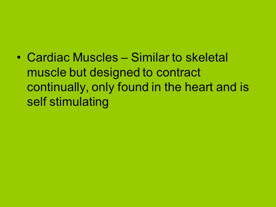 Cardiac Muscles – Similar to skeletal muscle but designed to contract continually, only found in the heart and is self stimulating