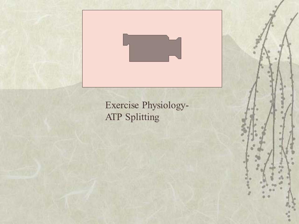 Exercise Physiology- ATP Splitting
