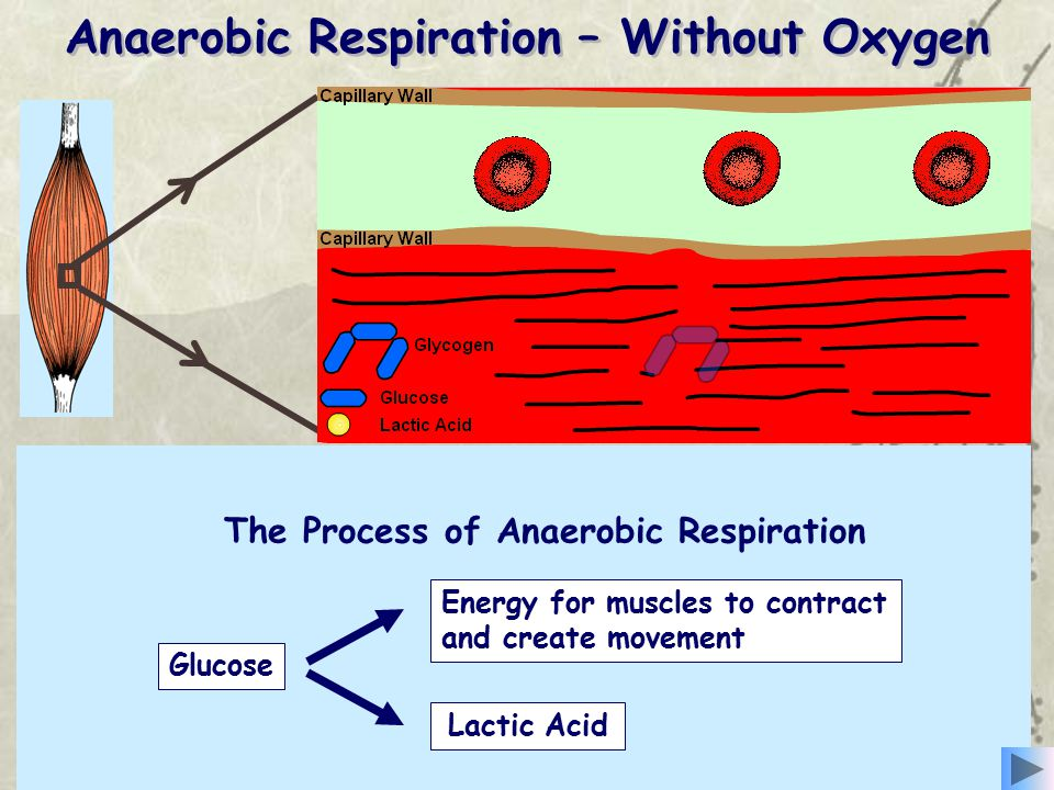 Anaerobic Respiration – Without Oxygen